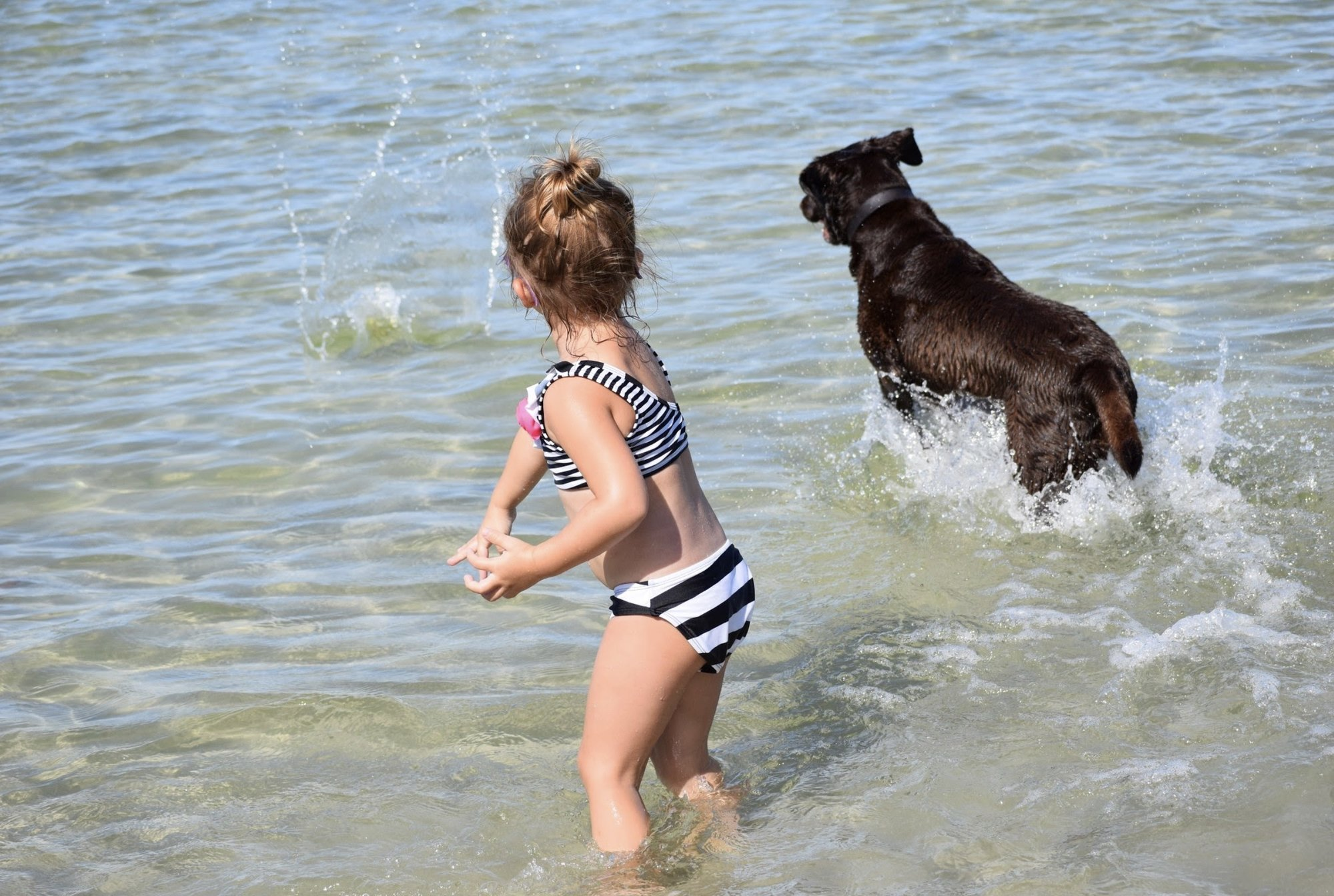 Dog Beaches in Naples Florida