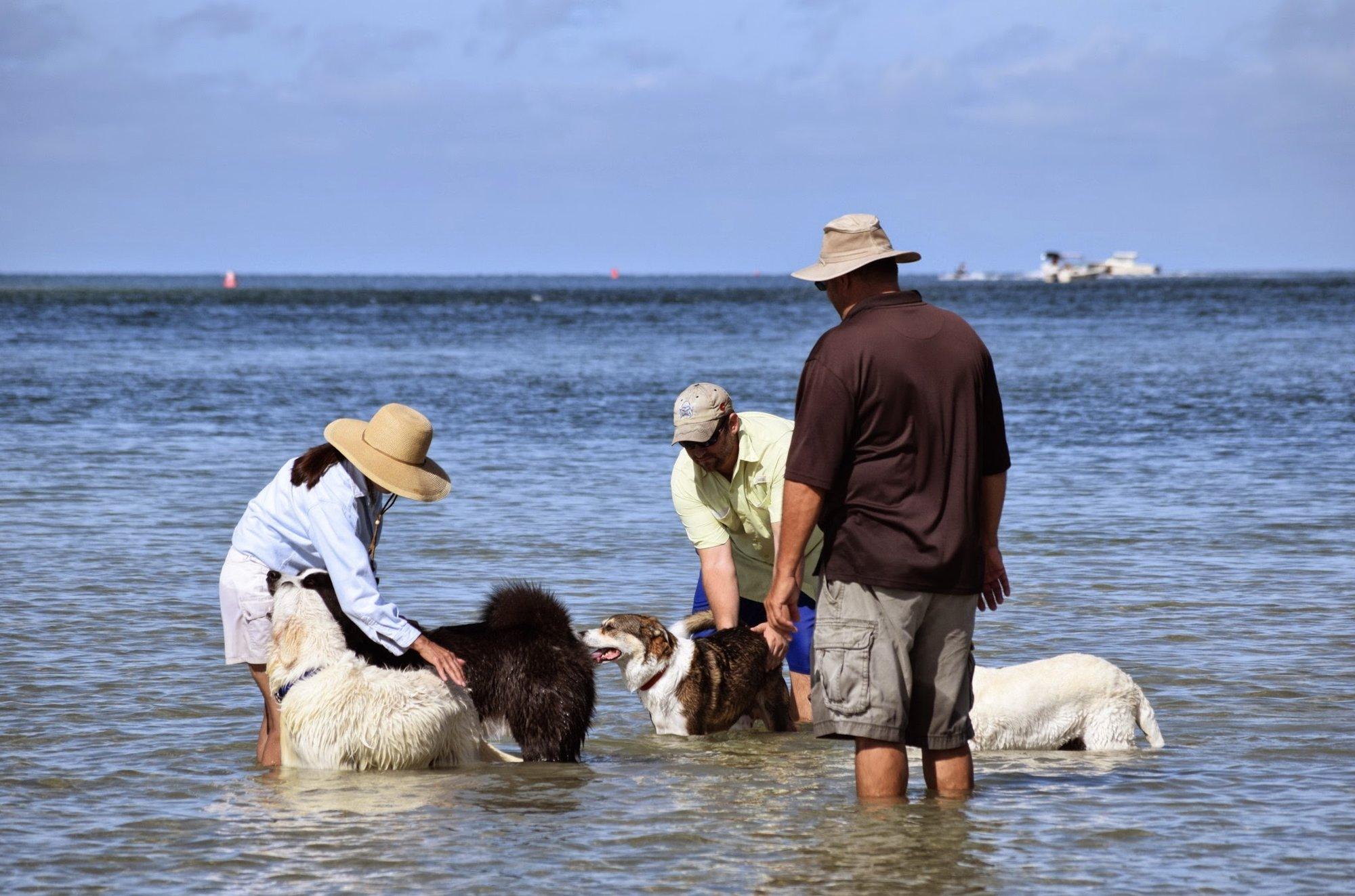 Dog Beach Near Naples Florida